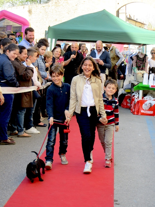 Marcantonio, Dog Show