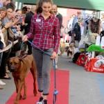 Oliver, Florence Dog Show