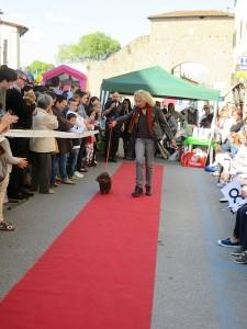 Portia & Lucia, Florence Dog Show